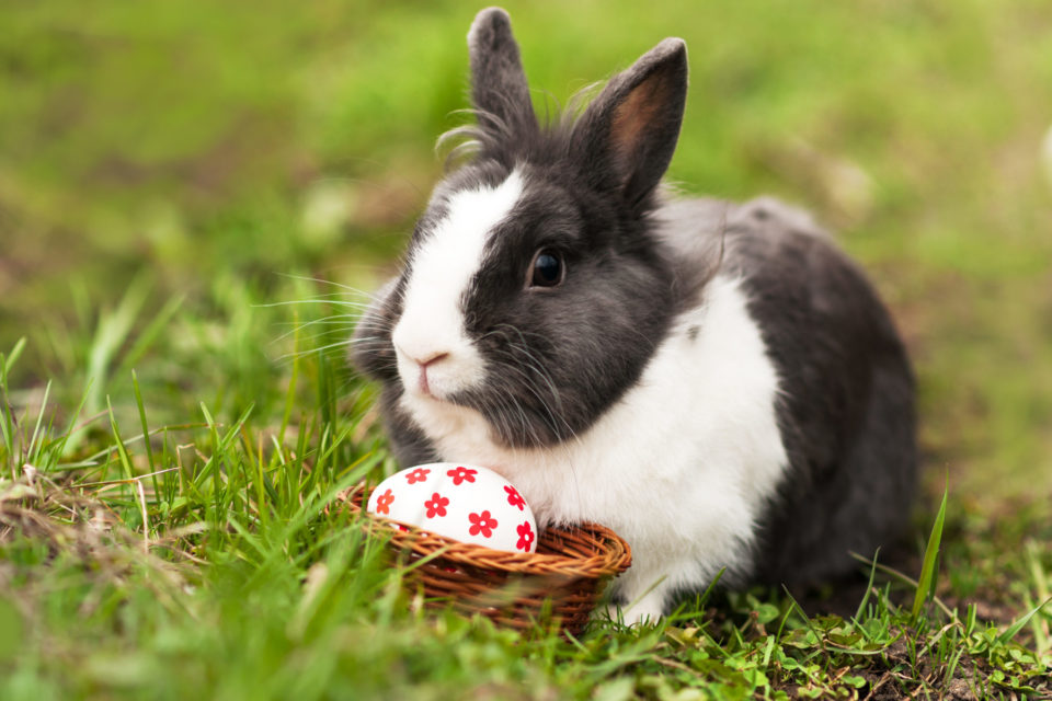 Rabbit Food Guide and Nutrition - Must Know Information for Pet Owners